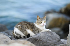 Cat in the beach. Siiting on a big rock Stock Image