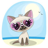 Cat on the beach. Cute Cat girl in sunglasses on the beach Royalty Free Stock Image