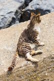 Cat on the beach Stock Images