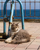 A cat on the beach. A cat lies imposingly on the beach Stock Photo