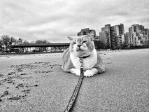 Cat on the beach. Stock Photo