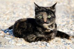 Cat on the beach. photo. Small spotted cat on the beach. photo Stock Photos