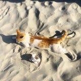 Cat on the beach. Cat beach sand Stock Photo