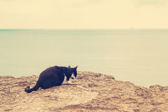 The  cat on the beach. Royalty Free Stock Photos