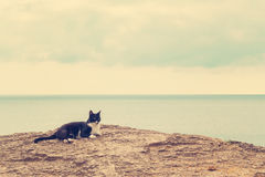 The  cat on the beach. Stock Image