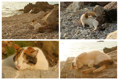 Cat in the beach. Sitting on a big rock Royalty Free Stock Photos