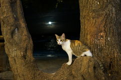 Cat on beach tree. Cat sat on branch of tree with beach, sea and moon visible behind Stock Image