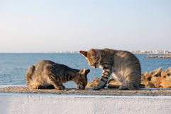 Cat beach Stock Photos