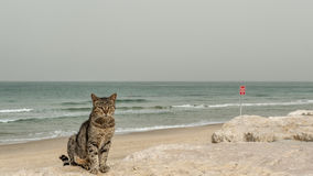 A cat by the beach. A cat was standing by the seaside and watching us...Photoed in Tel-Aviv Israel Stock Photos