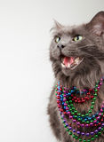 Cat in Beads Royalty Free Stock Photo