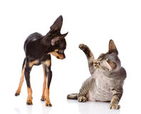 The cat beats a paw on a nose of a dog. isolated o Stock Photos