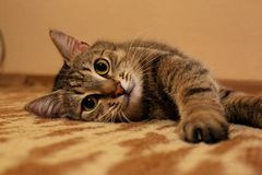 Cat Кот Royalty Free Stock Image