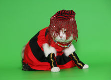 Cat in beautiful clothes. Cat in beautiful clothes on a green background Stock Photo