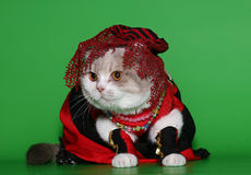 Cat in beautiful clothes. Stock Photography