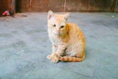 Cat. Beautiful cat in delhi click in urban city royalty free stock image