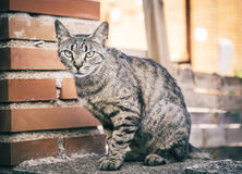 Cat with beautiful eyes in the street.  royalty free stock image