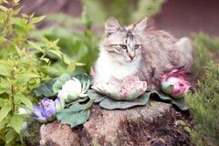 Кошка Stock Image