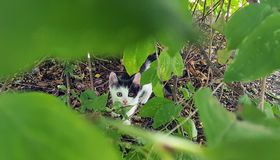 Cat. Beautiful Little cat hidden under the Green leaves Stock Images