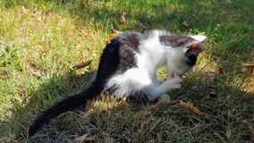 Cat. Beautiful Little cat playing in the garden Stock Photography