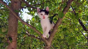 Cat. Beautiful Little cat playing in the tree Stock Photography