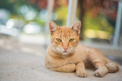 Cat. Beautiful cat look at me stock image