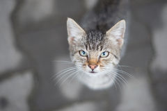 Cat. Beautiful cat look at me royalty free stock photography