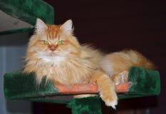 Cat. Beautiful cat Looking At Camera Stock Photos