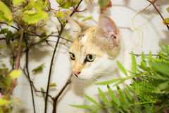 Cat. Beautiful tricolor kitten playing in the garden stock images