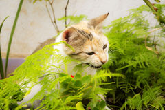 Cat. Beautiful tricolor kitten playing in the garden stock photos