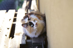 Cat. Beautiful Tricolor cat looking at fly Royalty Free Stock Photography
