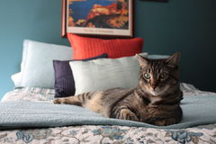 Cat on the bed. Cat sitting on a bed Royalty Free Stock Photos