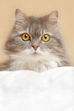 Cat on bed Stock Photo