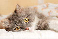 Cat on bed Stock Image