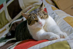 Cat on the bed. Cat sleeping on the bed royalty free stock image