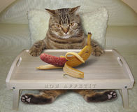 Cat in bed and banana Royalty Free Stock Photo