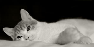 Cat in bed. Big eyes,black and white Stock Photo