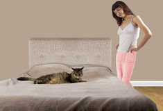 Cat on a Bed Royalty Free Stock Photo