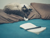 Cat in bed with notepad Stock Image