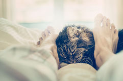 Cat in bed. Women's feet cuddle cat muzzle. Stock Image