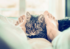 Cat in bed. Women's feet cuddle cat muzzle. Royalty Free Stock Photos
