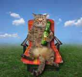 Cat with beer on meadow. The cat with a bottle of beer sits on a red deck chair at the meadow stock images