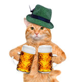 Cat with a beer mug Stock Photos