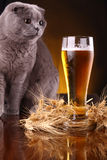 Cat and beer Stock Image