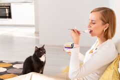 Free Cat Begs For Food From Her Owner Eating Yogurt, Watches Her Every Action, Sitting On The Floor In Living Room Royalty Free Stock Photo - 182979725