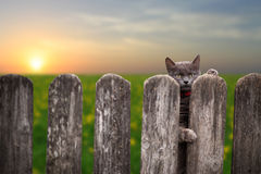 Cat Behind A Fence Royalty Free Stock Photos