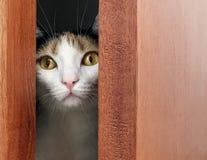 Cat behind ajar door. Close-up view of a cat looking out through black ajar door Royalty Free Stock Photography