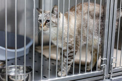 Cat behind bars Royalty Free Stock Photo