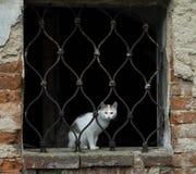 Cat behind bars Stock Image