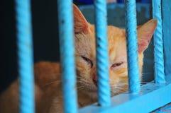 Cat behind bars royalty free stock photos
