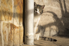 Cat. A cat behind a corner Royalty Free Stock Image